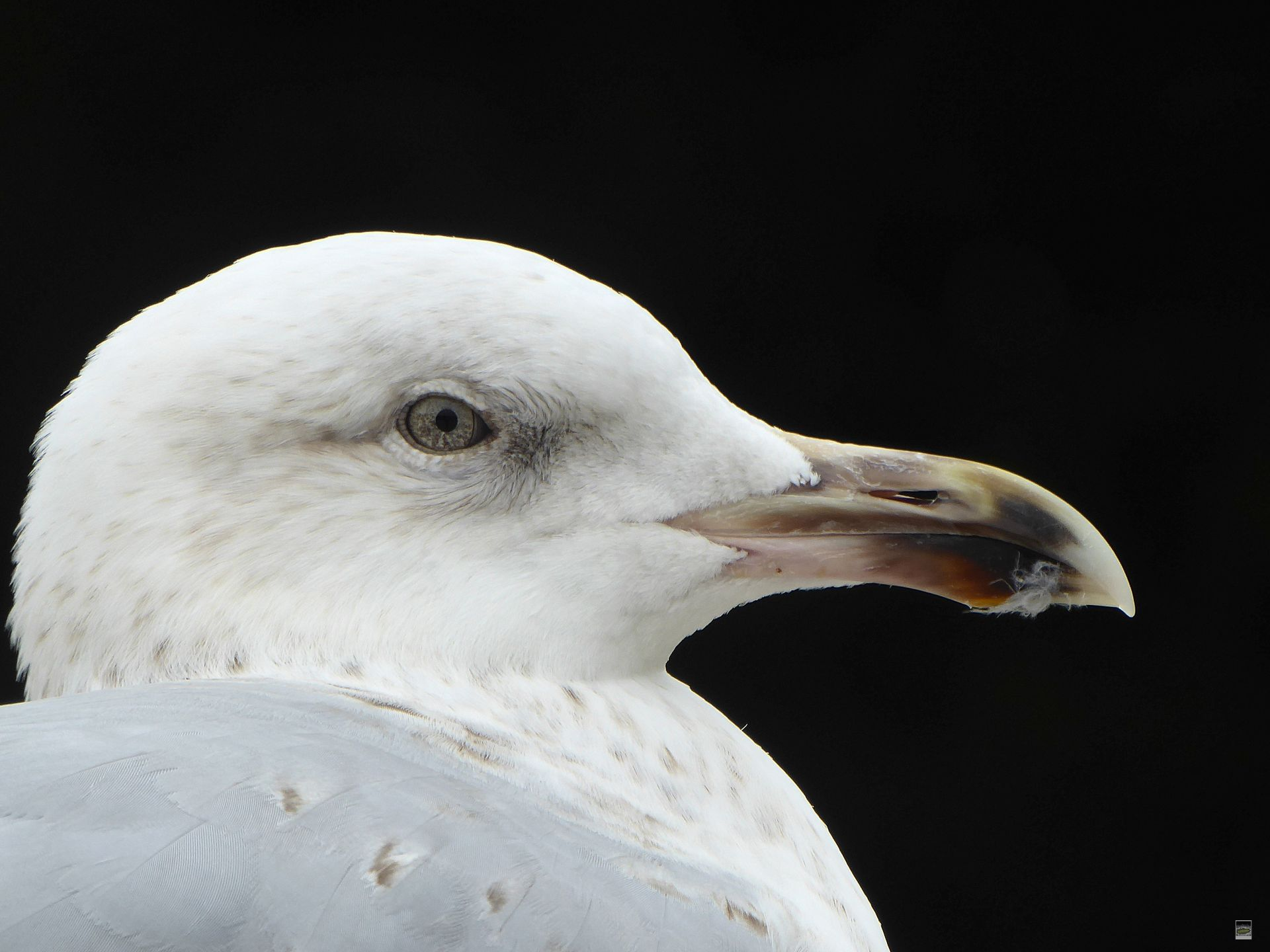 Fotografin: Hedwig Wantia